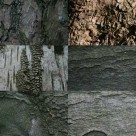 Brand new bark texture pack