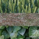 Going green – 7 hi-res plant textures