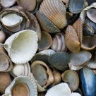 4 hi-res mussel shell textures