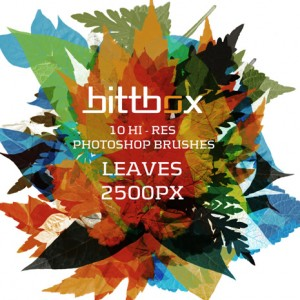 BittBox_hires_leaves