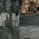 Brand new bark texture pack