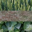 Going green – 7 hi-res plant textures